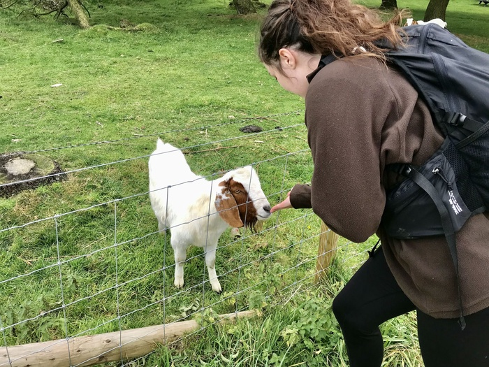 """Sam: """"Hi goat"""""""